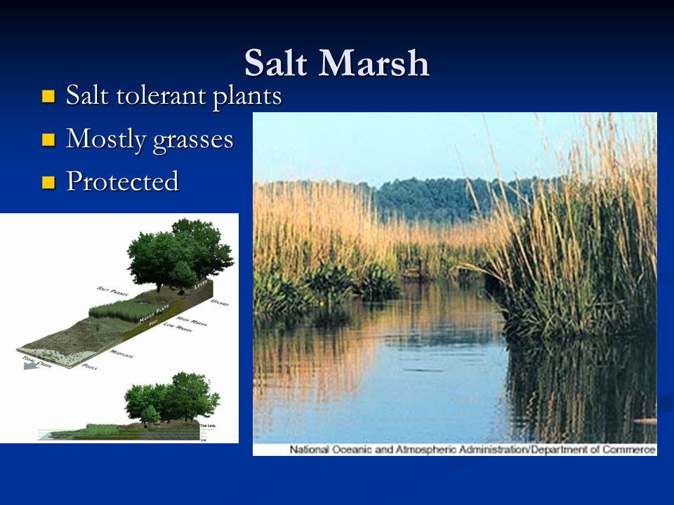 Salt Marsh Salt tolerant plants Salt tolerant plants Mostly grasses Mostly grasses Protected Protected