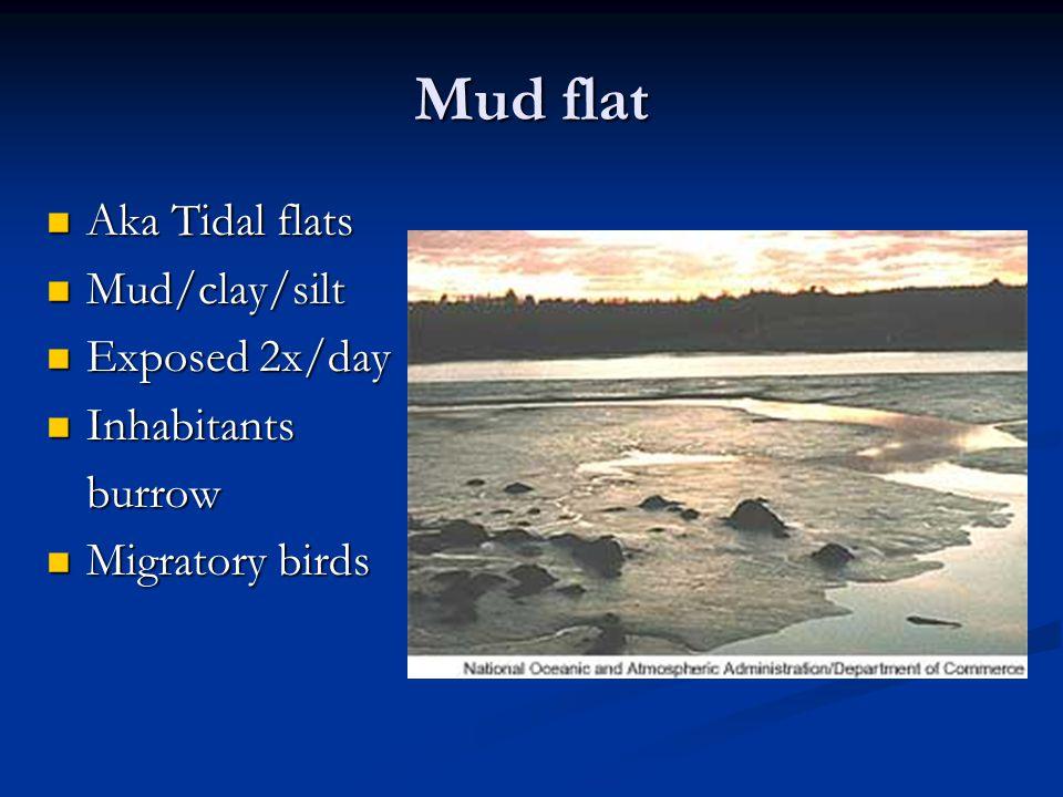 Mud flat Aka Tidal flats Aka Tidal flats Mud/clay/silt Mud/clay/silt Exposed 2x/day Exposed 2x/day Inhabitants Inhabitantsburrow Migratory birds Migratory birds