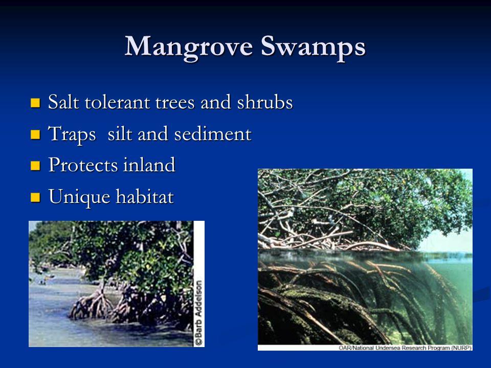 Mangrove Swamps Salt tolerant trees and shrubs Salt tolerant trees and shrubs Traps silt and sediment Traps silt and sediment Protects inland Protects inland Unique habitat Unique habitat