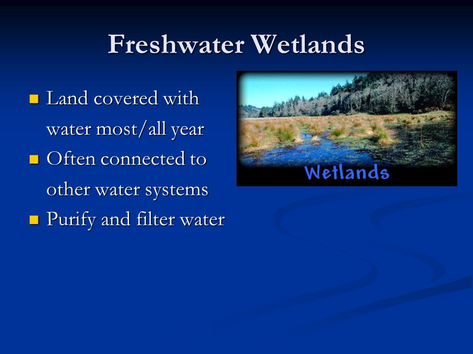 Freshwater Wetlands Land covered with Land covered with water most/all year Often connected to Often connected to other water systems Purify and filter water Purify and filter water