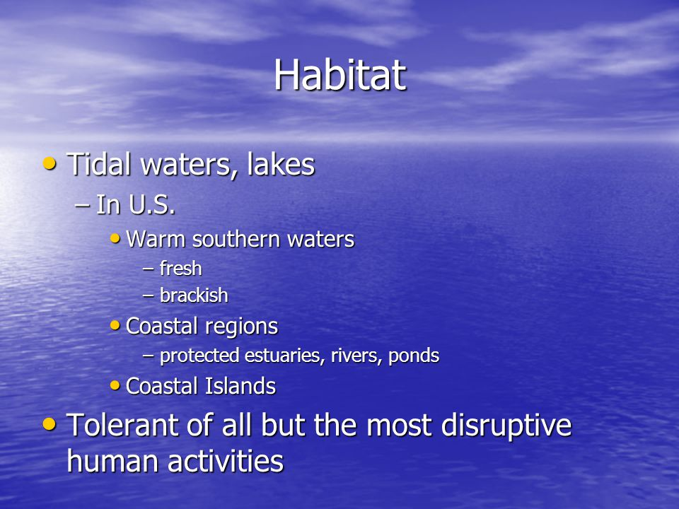 Habitat Tidal waters, lakes Tidal waters, lakes –In U.S.