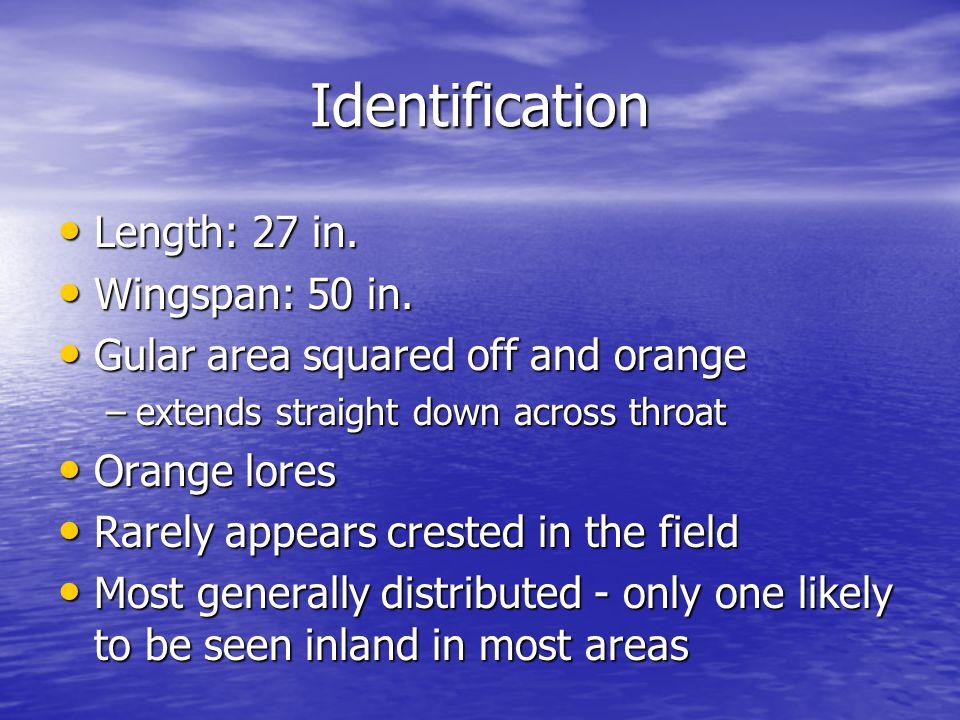 Identification Length: 27 in. Length: 27 in. Wingspan: 50 in.