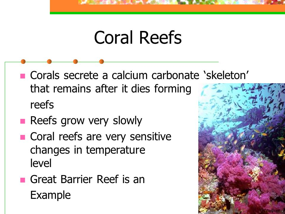 Coral Reefs Corals secrete a calcium carbonate 'skeleton' that remains after it dies forming reefs Reefs grow very slowly Coral reefs are very sensiti