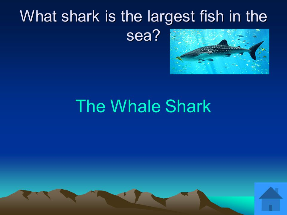 The Blue Shark What is one of the most common open ocean sharks?