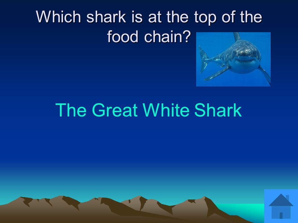 The Whale Shark What shark is the largest fish in the sea