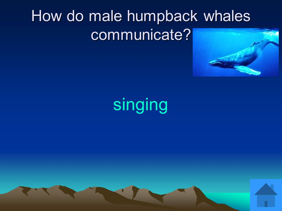 How do male humpback whales communicate? singing