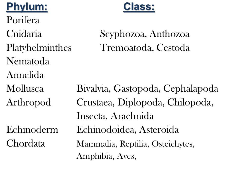 Phylum:Class: Porifera CnidariaScyphozoa, Anthozoa PlatyhelminthesTremoatoda, Cestoda Nematoda Annelida MolluscaBivalvia, Gastopoda, Cephalapoda ArthropodCrustaea, Diplopoda, Chilopoda, Insecta, Arachnida EchinodermEchinodoidea, Asteroida Chordata Mammalia, Reptilia, Osteichytes, Amphibia, Aves,