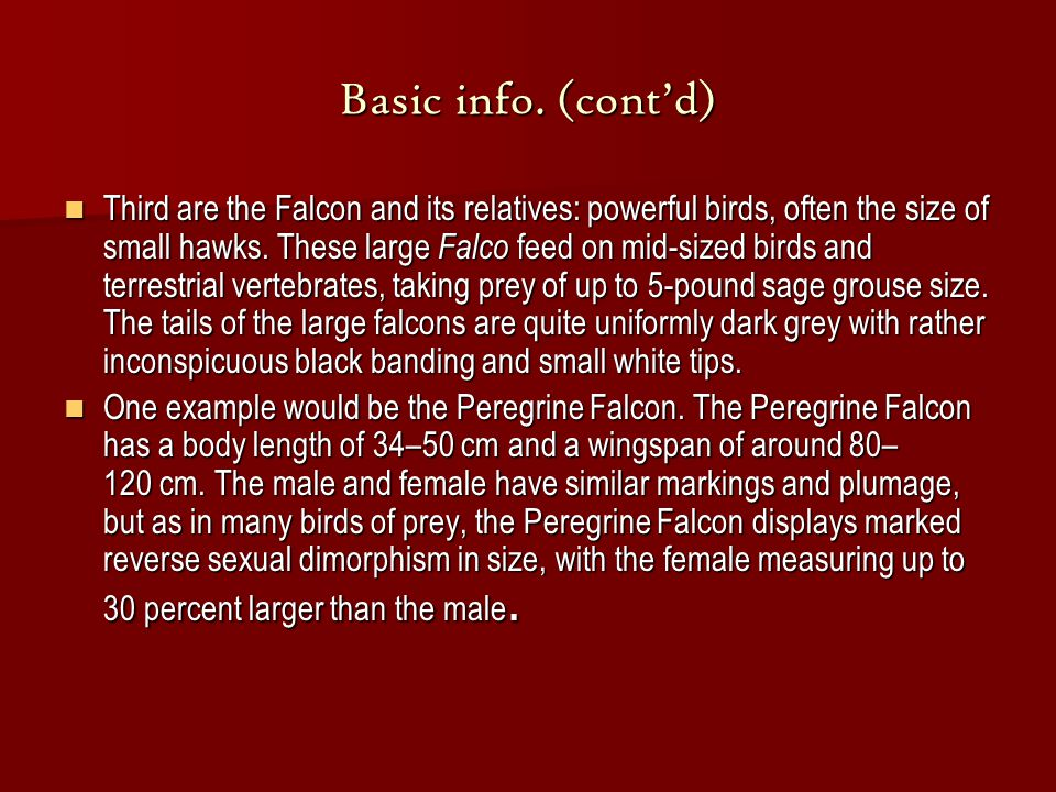Basic info. (cont'd) Third are the Falcon and its relatives: powerful birds, often the size of small hawks. These large Falco feed on mid-sized birds
