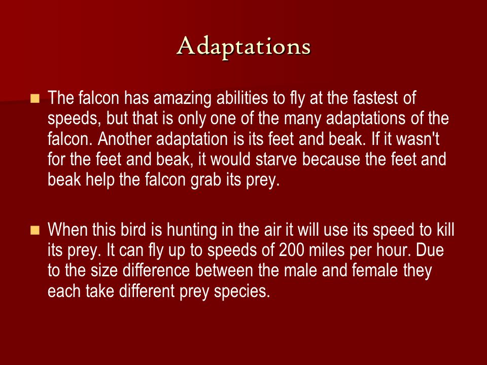 Adaptations The falcon has amazing abilities to fly at the fastest of speeds, but that is only one of the many adaptations of the falcon.