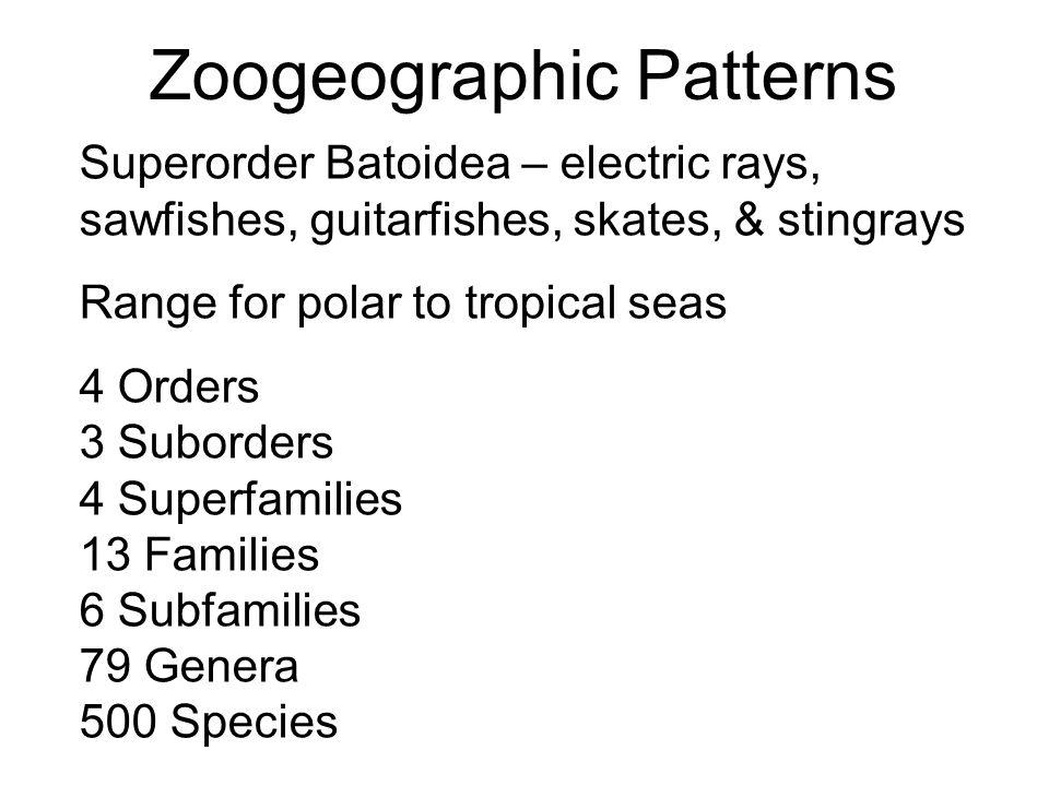 Zoogeographic Patterns Superorder Batoidea – electric rays, sawfishes, guitarfishes, skates, & stingrays Range for polar to tropical seas 4 Orders 3 S
