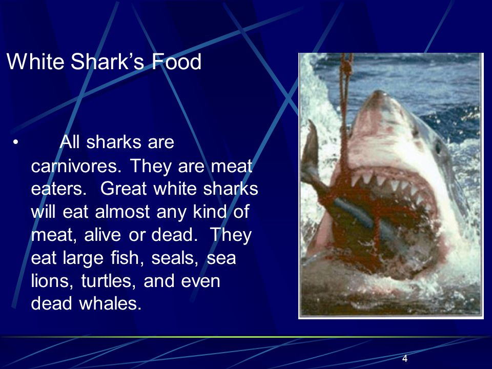 4 All sharks are carnivores. They are meat eaters.
