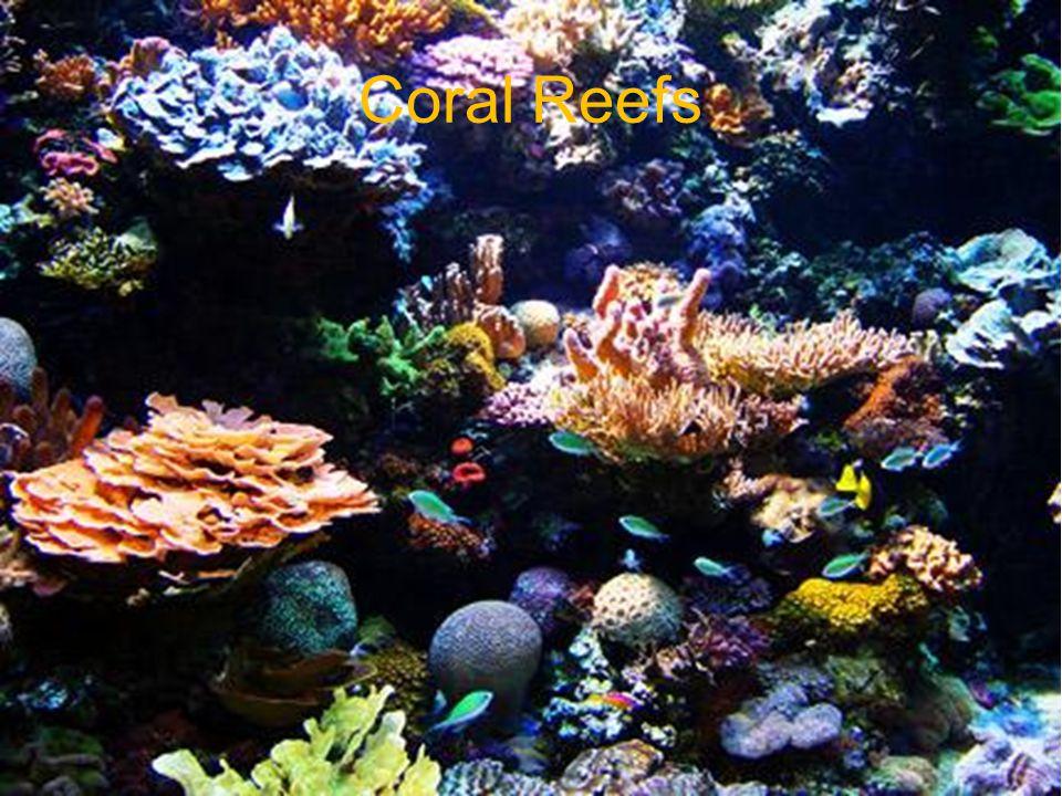 Bibliography: Pictures http://www.advancedaquarist.com/2006/6/aafeature http://www.enchantedlearning.com/subjects/ocean/Coralreef.shtml http://www.treehugger.com/dying-coral-frozen.jpg http://notexactlyrocketscience.files.wordpress.com/2006/10/nwhi_- _french_frigate_shoals_reef_-_many_fish.jpg http://www.richard- seaman.com/Wallpaper/Nature/Underwater/Horrors/JuvenileLionfish.jpg http://7art-screensavers.com/screenshots/fish/butterfly-fish.jpg http://www.bbc.co.uk/devon/content/images/2006/08/04/sea_grass_ste ve_trewhel_300x450.jpg http://www.sms.si.edu/IRLspec/images/SeaGrass1.jpg