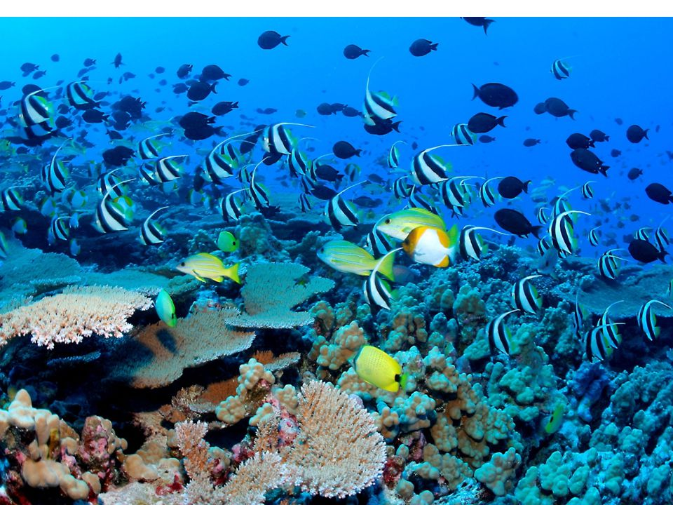 Bibliography: Information Coral reef destruction and conservation. Ocean world.