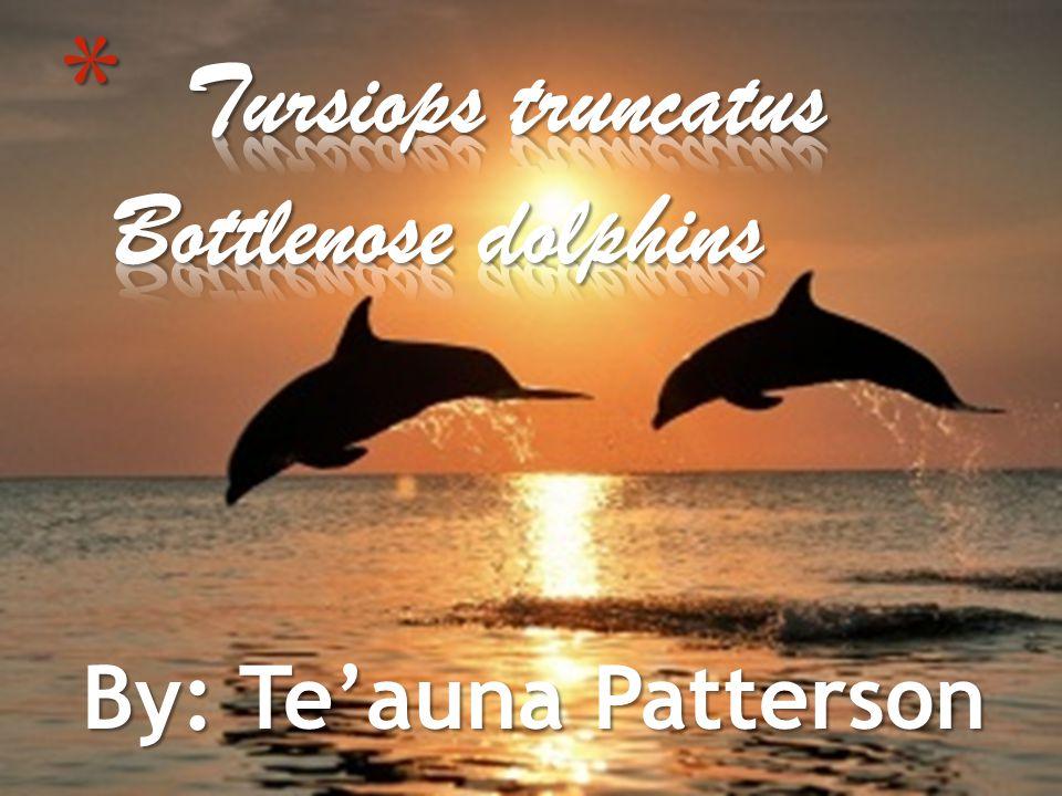 By: Te'auna Patterson
