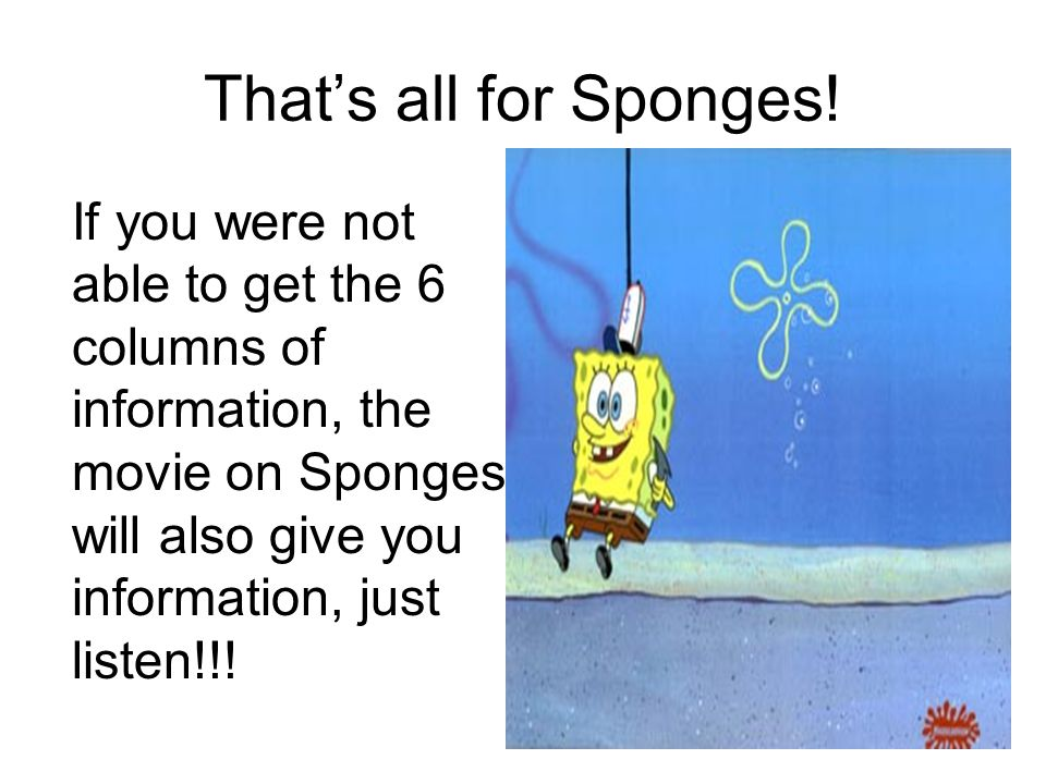 That's all for Sponges! If you were not able to get the 6 columns of information, the movie on Sponges will also give you information, just listen!!!