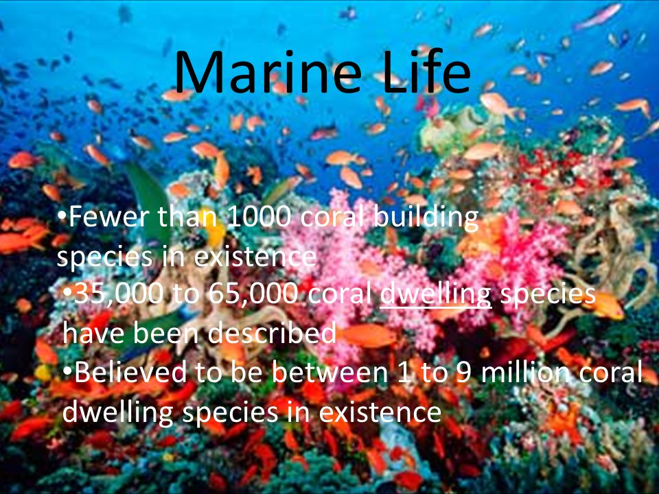 Marine Life 35,000 to 65,000 coral dwelling species have been described Believed to be between 1 to 9 million coral dwelling species in existence Fewer than 1000 coral building species in existence