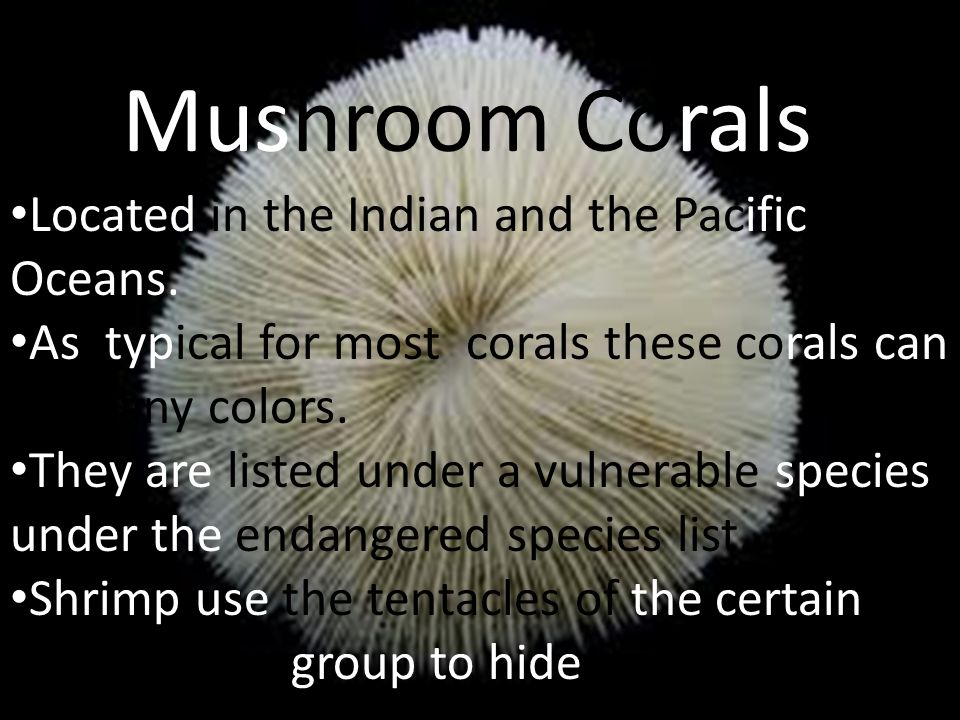 Mushroom Corals Located in the Indian and the Pacific Oceans.