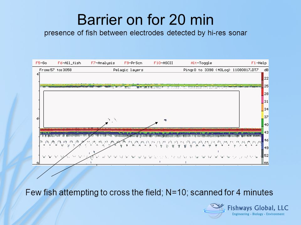 Barrier on for 20 min presence of fish between electrodes detected by hi-res sonar Few fish attempting to cross the field; N=10; scanned for 4 minutes