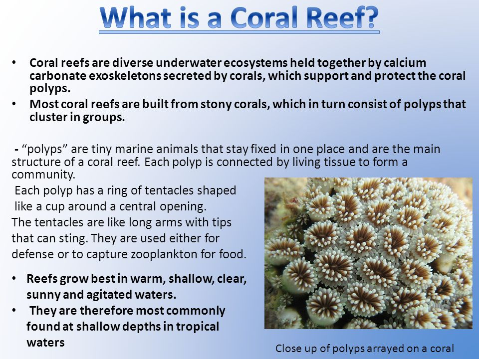 Coral reefs are diverse underwater ecosystems held together by calcium carbonate exoskeletons secreted by corals, which support and protect the coral polyps.
