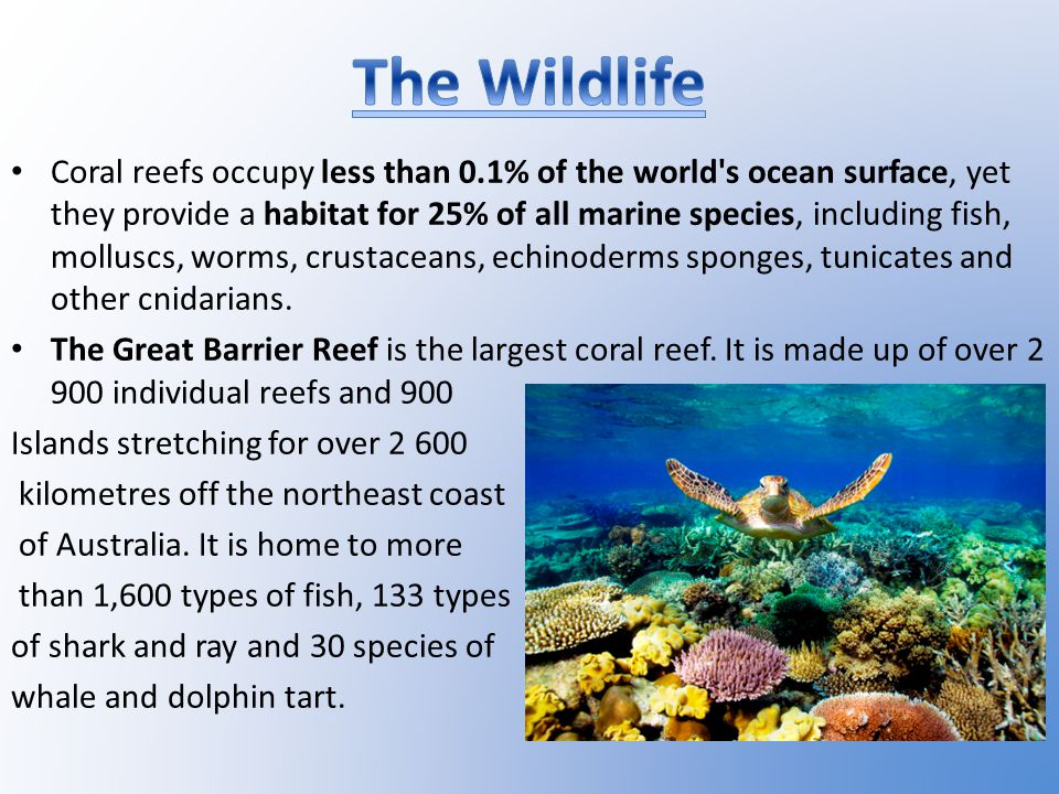 Coral reefs occupy less than 0.1% of the world s ocean surface, yet they provide a habitat for 25% of all marine species, including fish, molluscs, worms, crustaceans, echinoderms sponges, tunicates and other cnidarians.