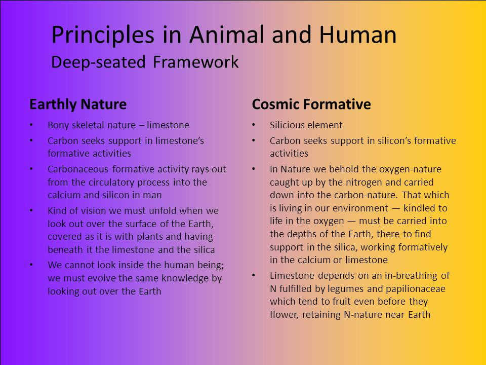Principles in Animal and Human Deep-seated Framework Earthly Nature Bony skeletal nature – limestone Carbon seeks support in limestone's formative act