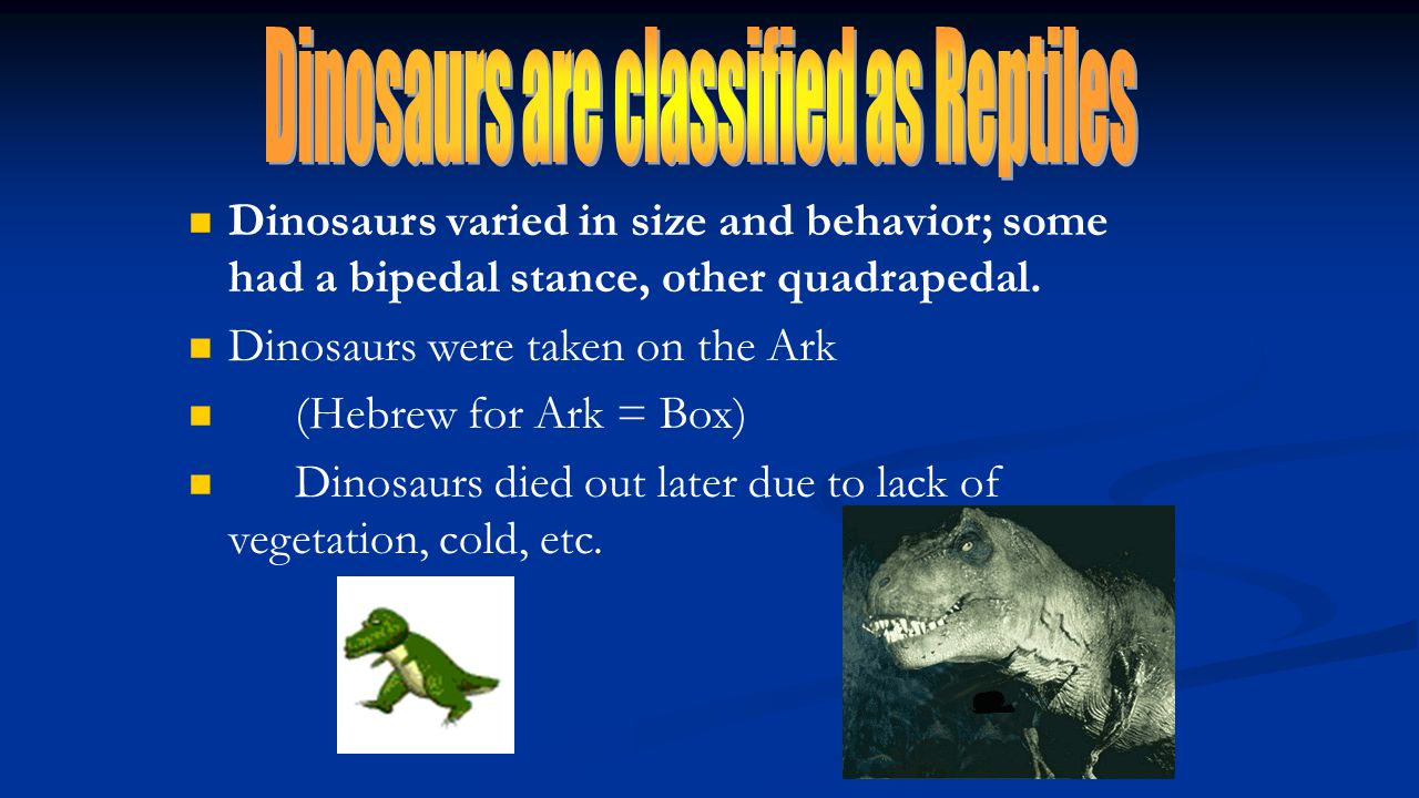 Dinosaurs varied in size and behavior; some had a bipedal stance, other quadrapedal. Dinosaurs were taken on the Ark (Hebrew for Ark = Box) Dinosaurs