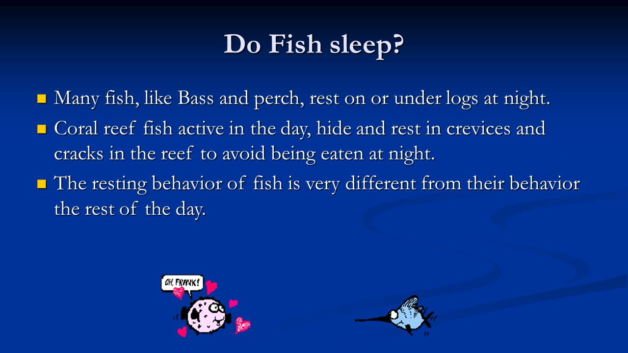 Do Fish sleep? Many fish, like Bass and perch, rest on or under logs at night. Many fish, like Bass and perch, rest on or under logs at night. Coral r