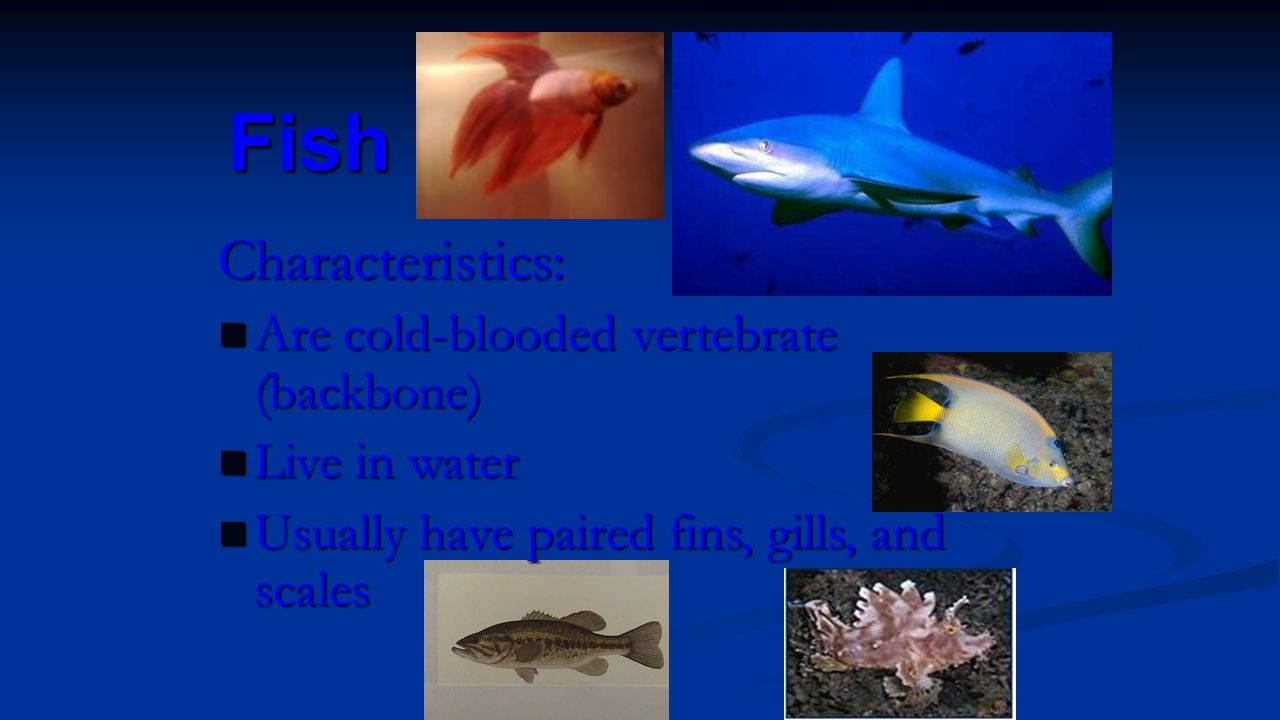 Fish Characteristics: Are cold-blooded vertebrate (backbone) Are cold-blooded vertebrate (backbone) Live in water Live in water Usually have paired fi