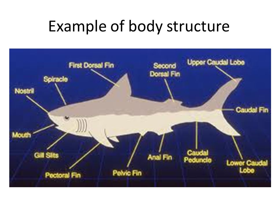 Example of body structure