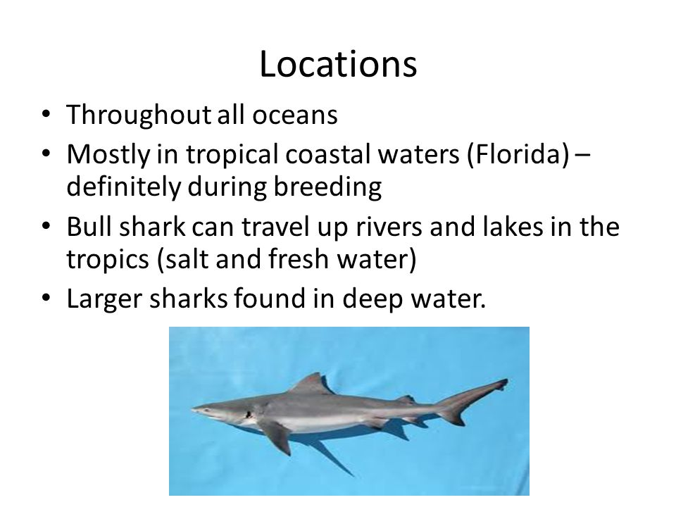 Locations Throughout all oceans Mostly in tropical coastal waters (Florida) – definitely during breeding Bull shark can travel up rivers and lakes in the tropics (salt and fresh water) Larger sharks found in deep water.