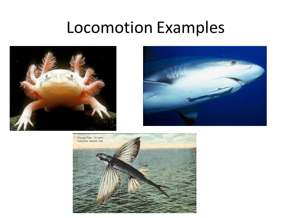 Locomotion Examples