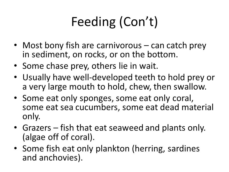 Feeding (Con't) Most bony fish are carnivorous – can catch prey in sediment, on rocks, or on the bottom. Some chase prey, others lie in wait. Usually