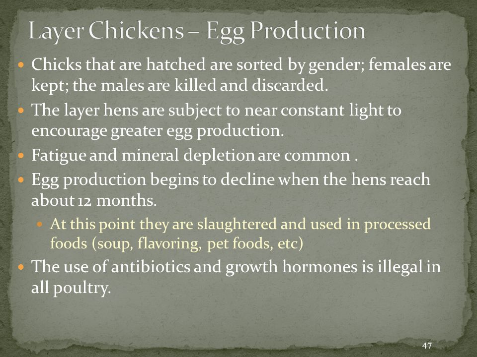 Chicks that are hatched are sorted by gender; females are kept; the males are killed and discarded.