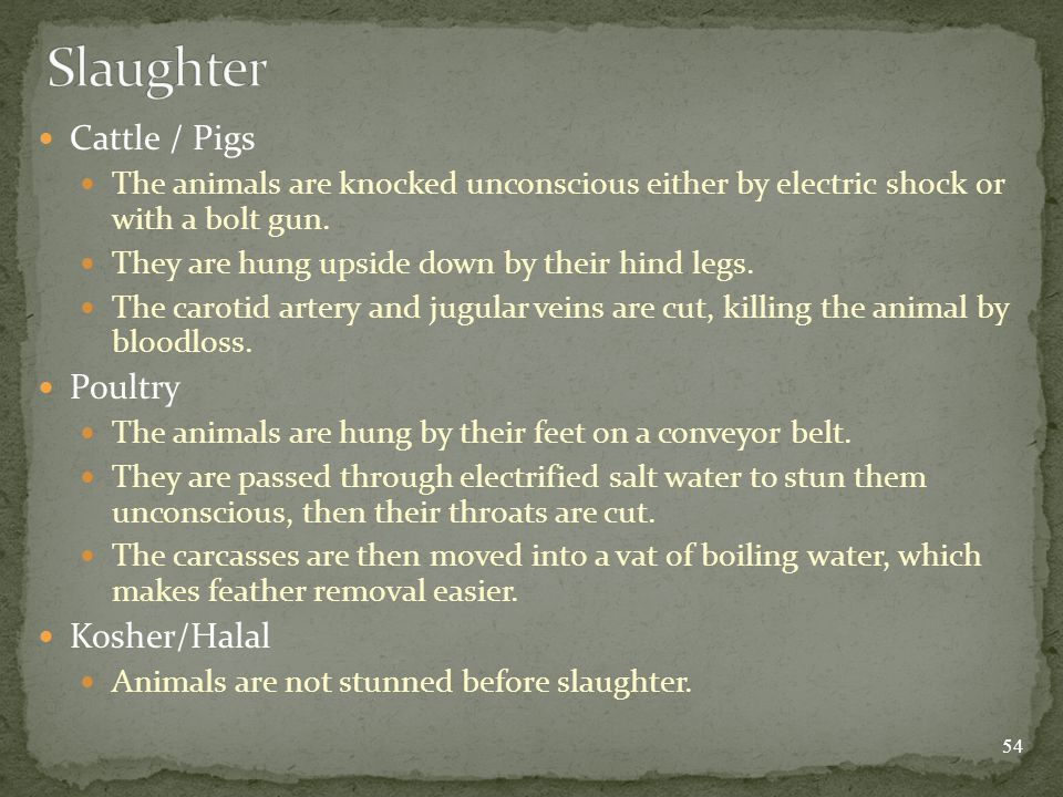 Cattle / Pigs The animals are knocked unconscious either by electric shock or with a bolt gun.