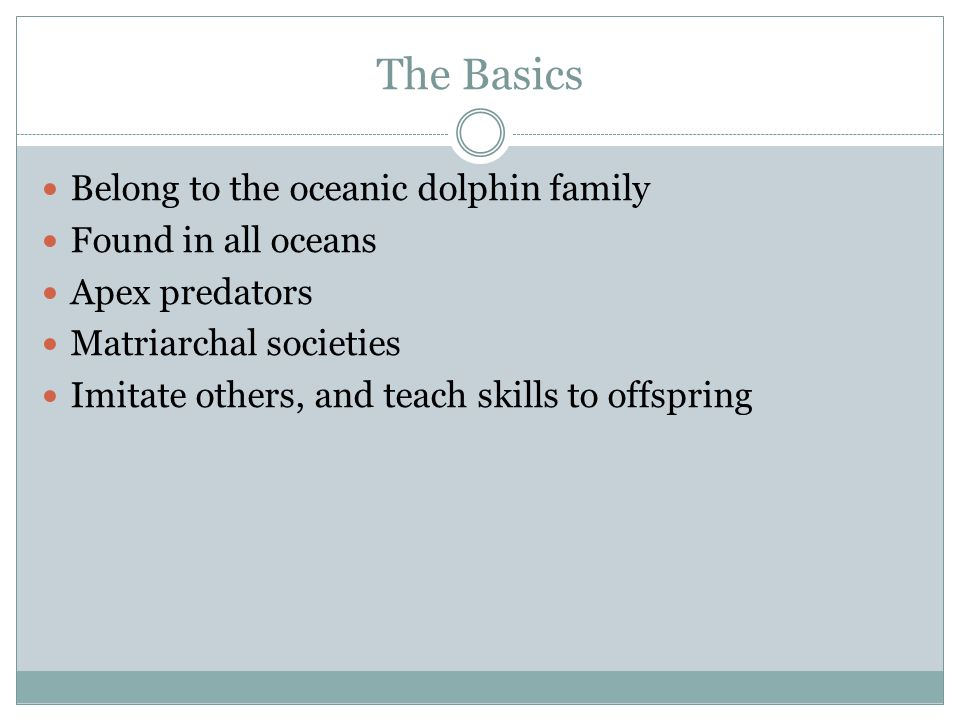 The Basics Belong to the oceanic dolphin family Found in all oceans Apex predators Matriarchal societies Imitate others, and teach skills to offspring