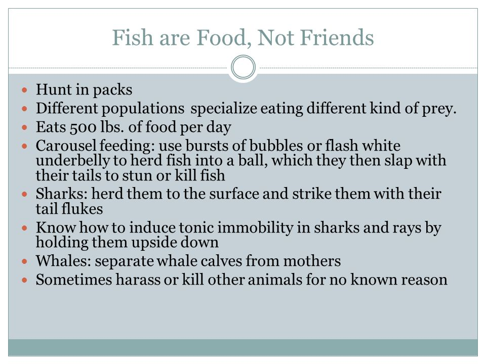 Fish are Food, Not Friends Hunt in packs Different populations specialize eating different kind of prey.