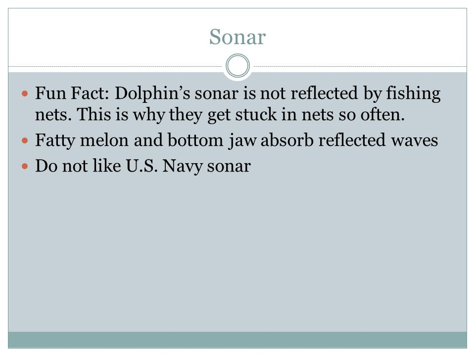 Sonar Fun Fact: Dolphin's sonar is not reflected by fishing nets.