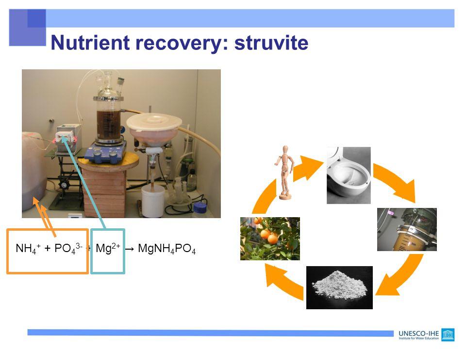 Nutrient recovery: struvite NH 4 + + PO 4 3- + Mg 2+ → MgNH 4 PO 4