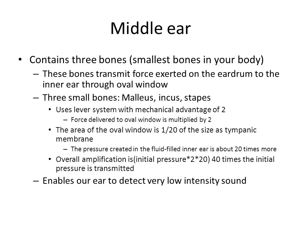 Middle ear Contains three bones (smallest bones in your body) – These bones transmit force exerted on the eardrum to the inner ear through oval window