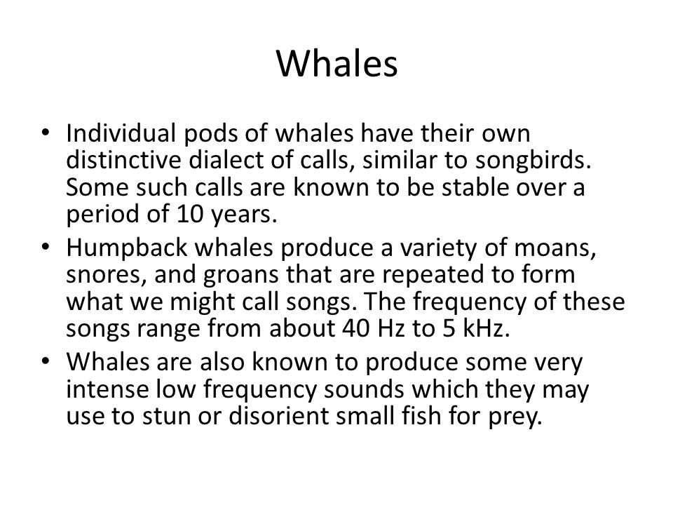 Whales Individual pods of whales have their own distinctive dialect of calls, similar to songbirds.
