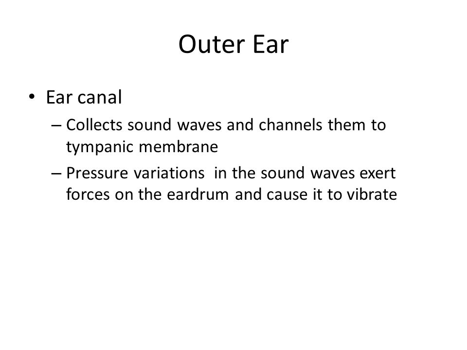 Outer Ear Ear canal – Collects sound waves and channels them to tympanic membrane – Pressure variations in the sound waves exert forces on the eardrum and cause it to vibrate