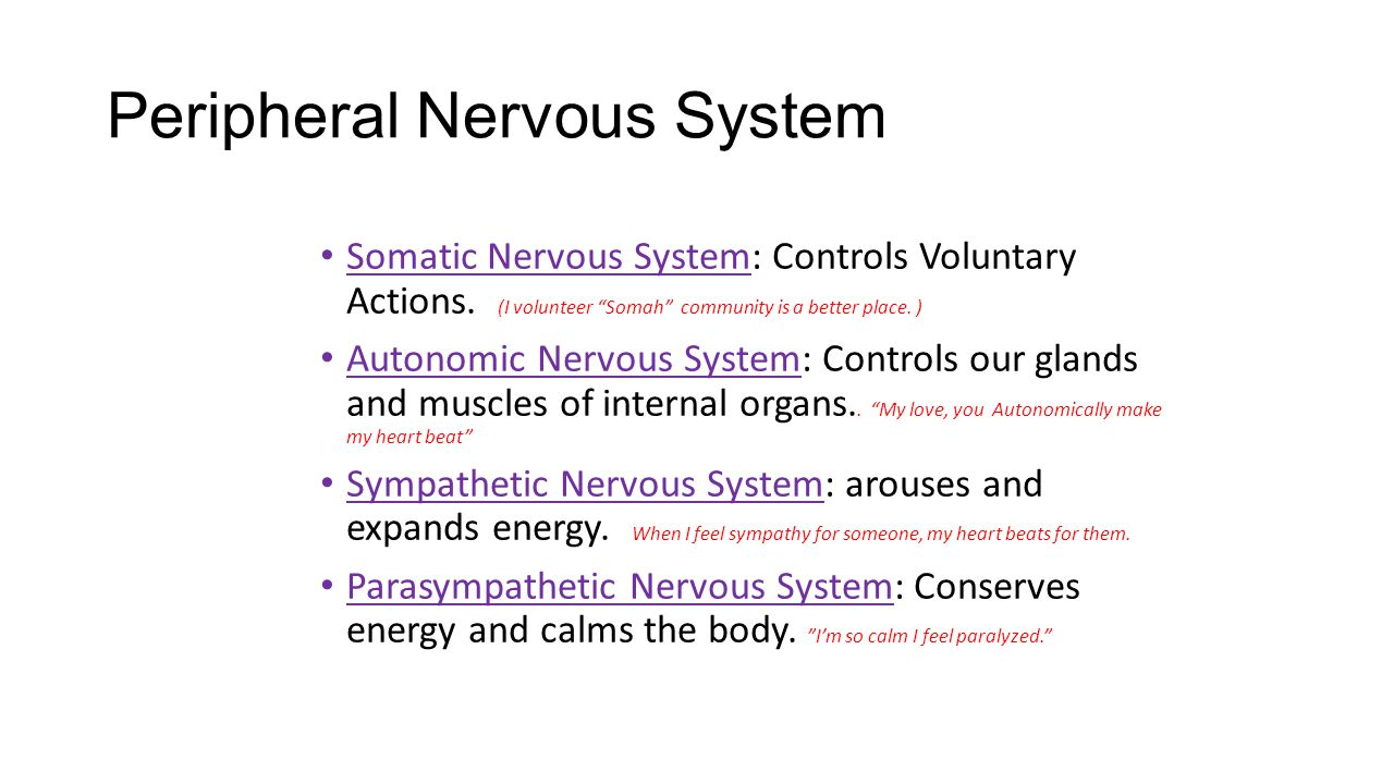 """Peripheral Nervous System Somatic Nervous System: Controls Voluntary Actions. (I volunteer """"Somah"""" community is a better place. ) Autonomic Nervous Sy"""