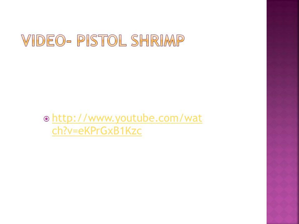  http://www.youtube.com/wat ch?v=eKPrGxB1Kzc http://www.youtube.com/wat ch?v=eKPrGxB1Kzc