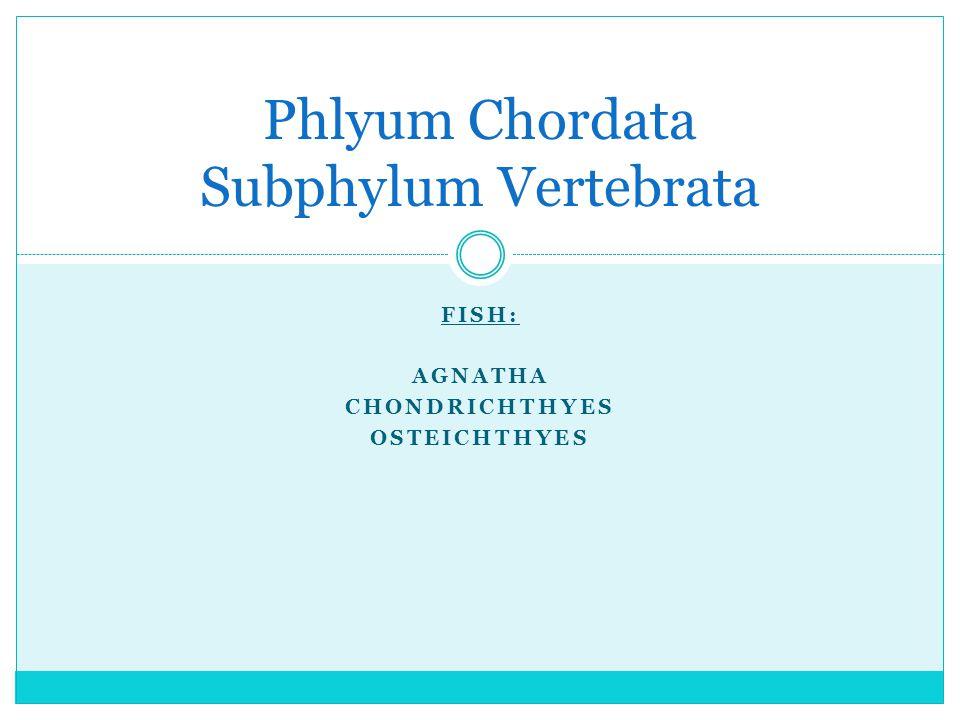 FISH: AGNATHA CHONDRICHTHYES OSTEICHTHYES Phlyum Chordata Subphylum Vertebrata