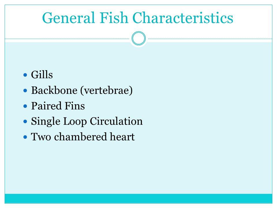 General Fish Characteristics Gills Backbone (vertebrae) Paired Fins Single Loop Circulation Two chambered heart