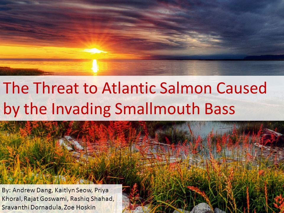 The Threat to Atlantic Salmon Caused by the Invading Smallmouth Bass By: Andrew Dang, Kaitlyn Seow, Priya Khoral, Rajat Goswami, Rashiq Shahad, Sravanthi Dornadula, Zoe Hoskin