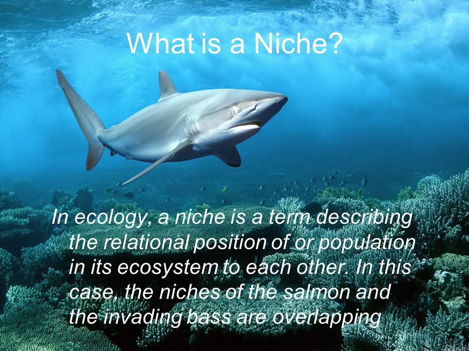 What is a Niche? In ecology, a niche is a term describing the relational position of or population in its ecosystem to each other. In this case, the n