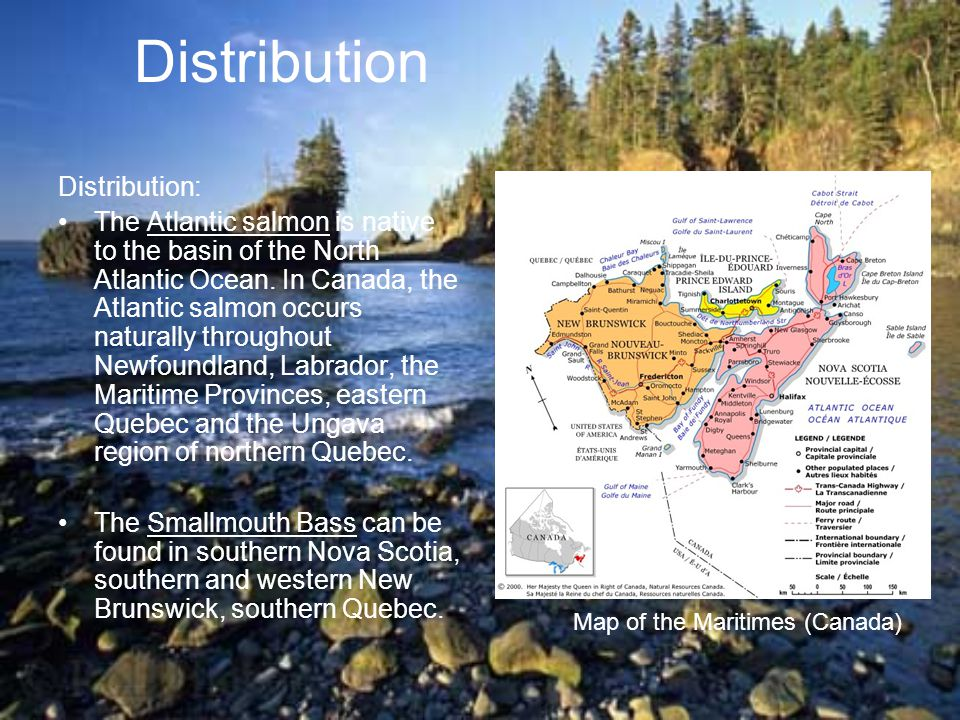 Distribution Distribution: The Atlantic salmon is native to the basin of the North Atlantic Ocean.