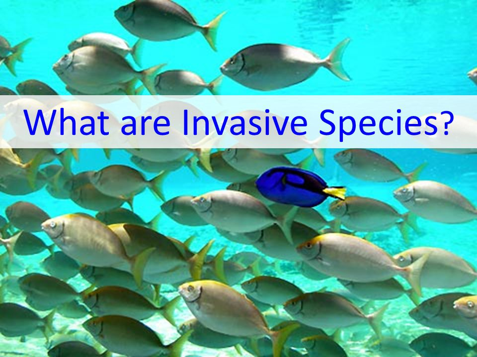 What are Invasive Species ?