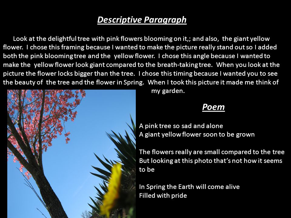 Descriptive Paragraph Look at the delightful tree with pink flowers blooming on it,; and also, the giant yellow flower.